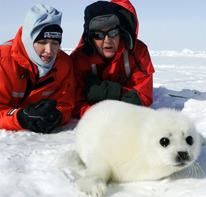 Paul and Heather McCartney pose with a baby seal in a protest against the Arctic seal hunt.